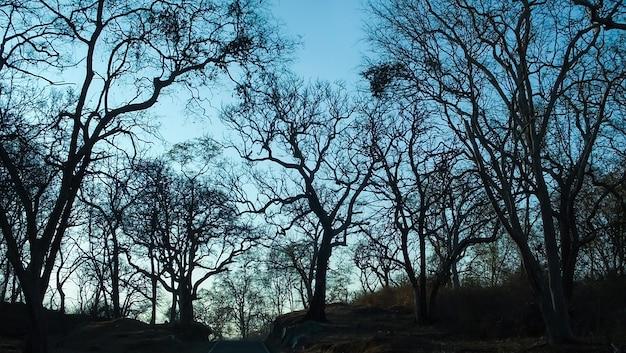 푸른 석양에 숲 나무
