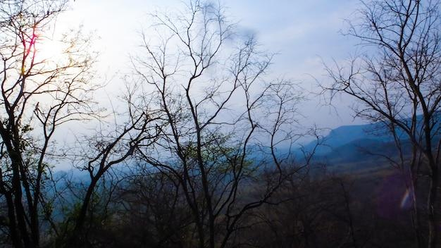 멋진 저녁에 숲 나무
