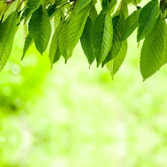 森の木々の葉。自然緑の木の日光の背景。