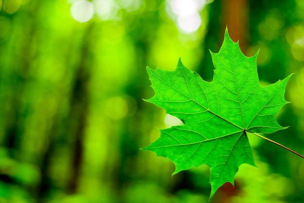 숲 나무 잎. 자연 녹색 나무 햇빛.