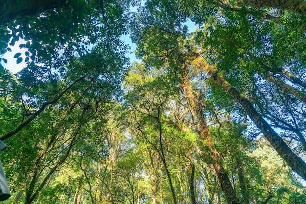 숲 나무. 자연 녹색 나무 햇빛과 하늘