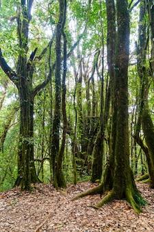 Лесные деревья. природа зеленый дерево солнечный свет и небо