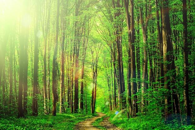 森の木。自然緑の木の日光の背景。空