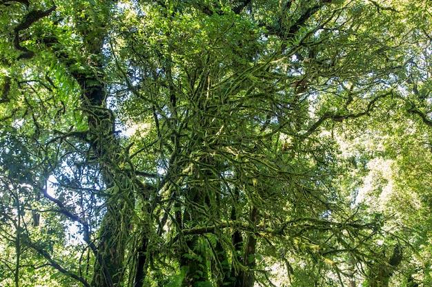 森の木。自然緑の木の日光の背景。