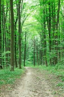 森の木自然緑の木の日光の背景