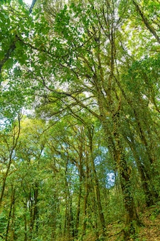 Forest trees. nature green wood sunlight and sky