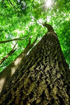숲 나무. 자연 녹색 나무, 햇빛.