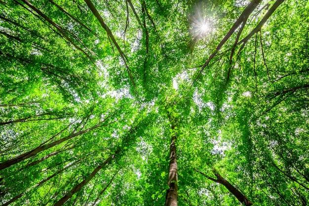 森の木。自然の緑の木、日光。