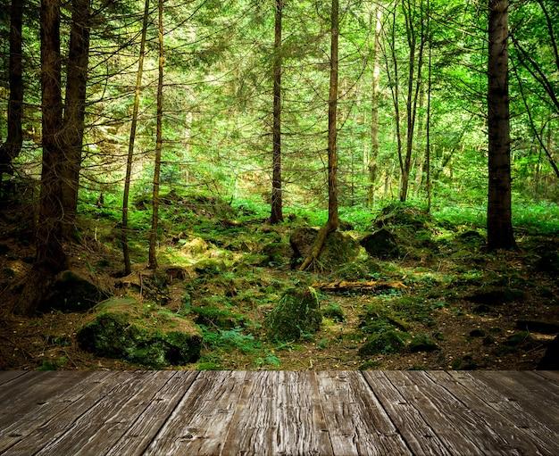 森の木自然緑の木の日光
