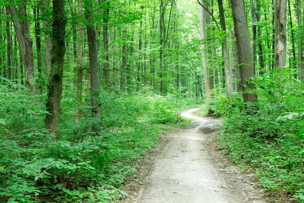 Лесные деревья. природа зеленая