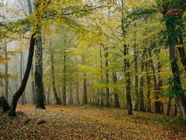 森の木々自然風景旅行の葉