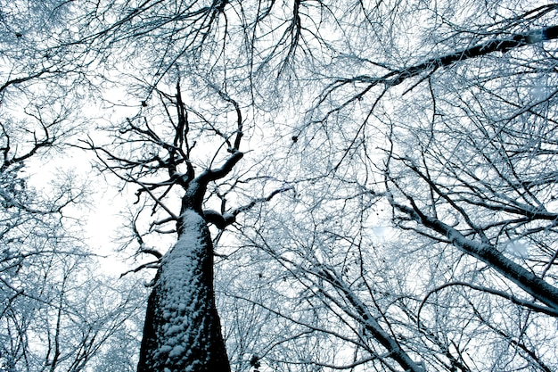 Forest trees. nature snow wood background