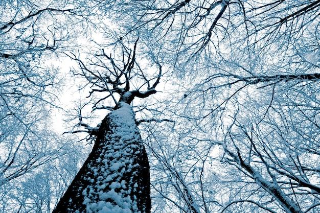 森の木。自然の雪の木の壁。