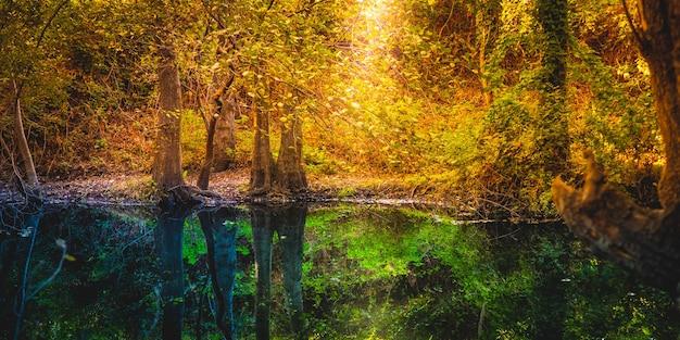 秋の穏やかな川の水に森の木々が映ります。