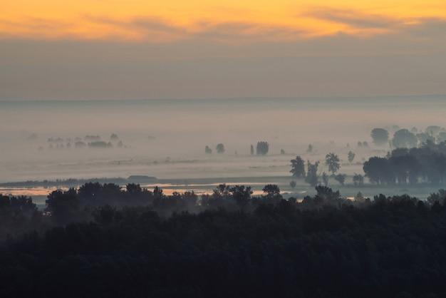 Лес под дымкой ранним утром