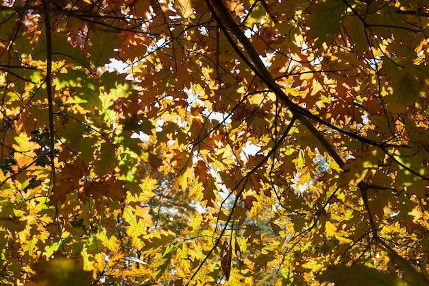 Лес под лучами солнца осенью