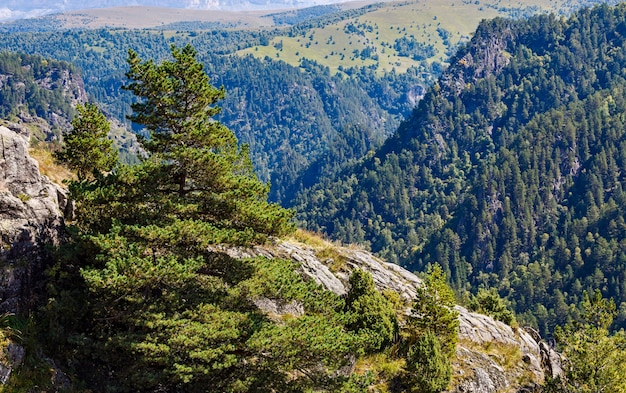山の森の植生