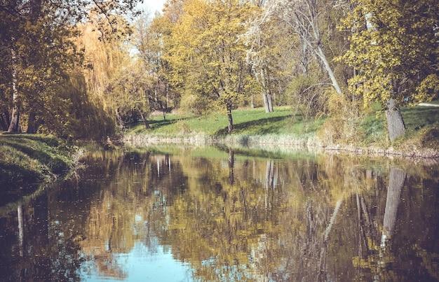 湖、木々、草のフィルターからの森の眺め