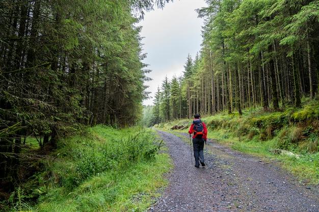 パスの女の子と森の道