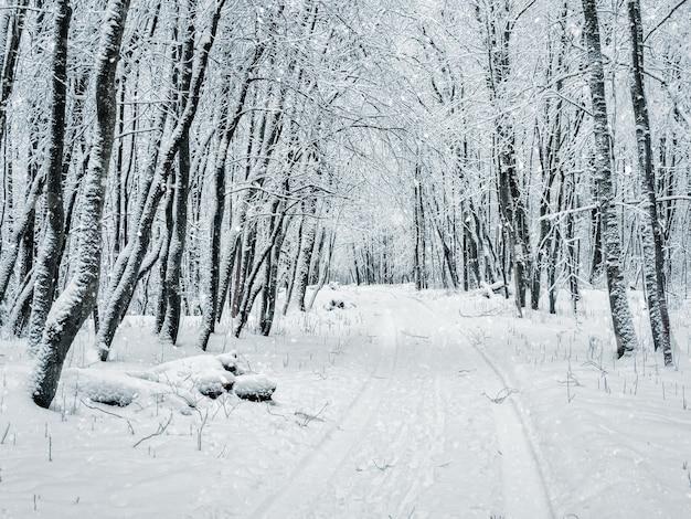 森の冬の雪道。森の中の降雪。