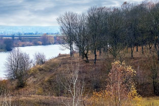 晩秋の川沿いの裸木の森