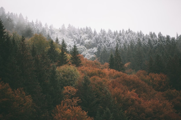 Forest with fog and snow high in the mountains