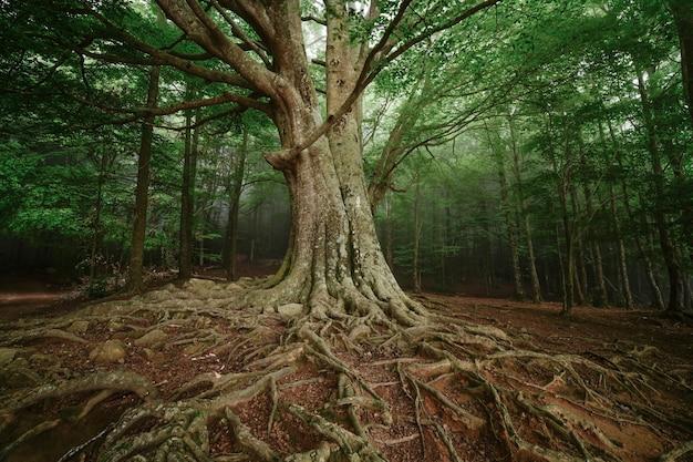 Лес с туманом