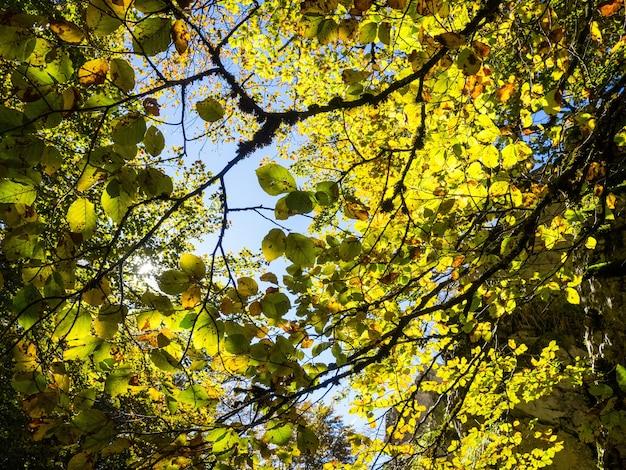 昼間の新緑の木々の森