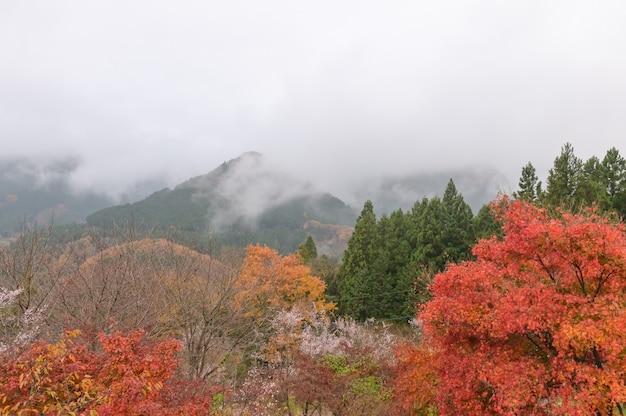 秋の黄金色の葉の森、黄色の木々と太陽の美しい秋の風景。