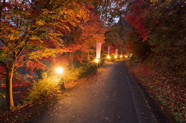 秋の黄金色の葉の森黄色の木々のある美しい秋の風景