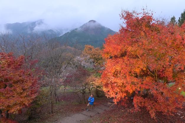 ドゥリンの夕日に秋の黄金色の葉のある森