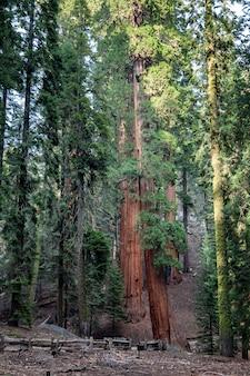 大きな木の森