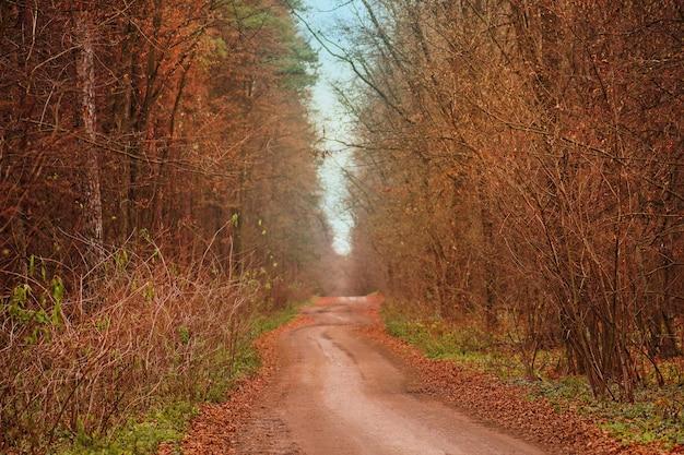 暖かい日差しがたくさんある森。森の中の秋の木々。秋の日没の森