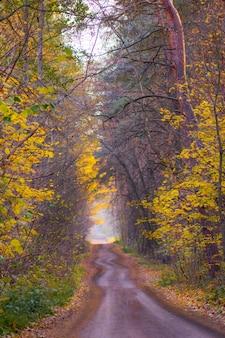暖かい日差しがたくさんある森。ヨーロッパの森の秋の木々。