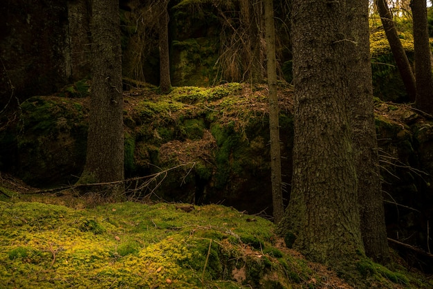 Forest with moss on the ground