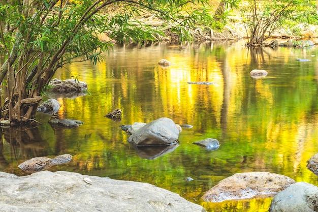 山川のある森。パノラマのエキゾチックな美しい熱帯雨林の滝