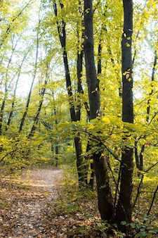 Una foresta con un percorso attraverso il verde degli alberi e dei cespugli, foglie cadute a terra, chisinau, moldavia