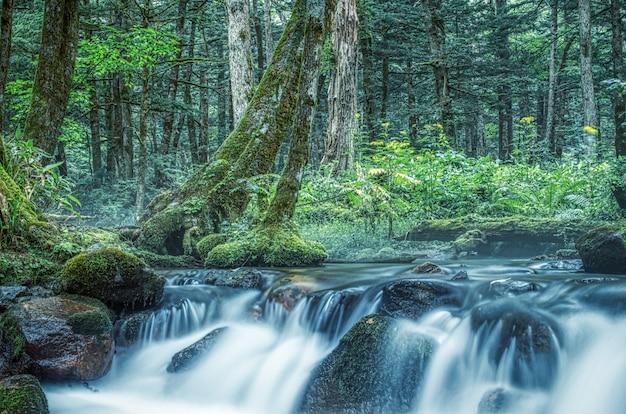 川のある森