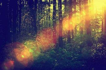 Forest with sunbeam