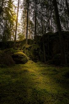 나뭇 가지를 통해 빛나는 태양이있는 숲