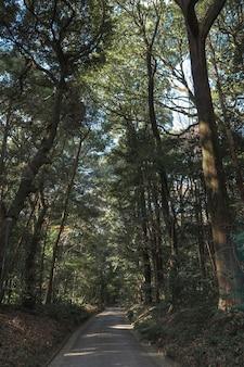나무와 숲을 닫습니다.