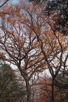 木々のある森がクローズアップ