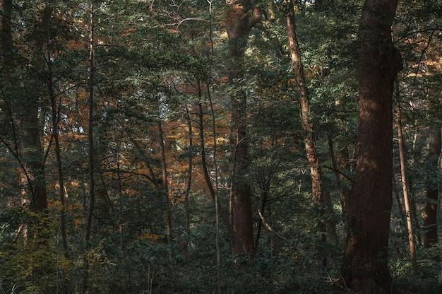 Лес с деревьями крупным планом