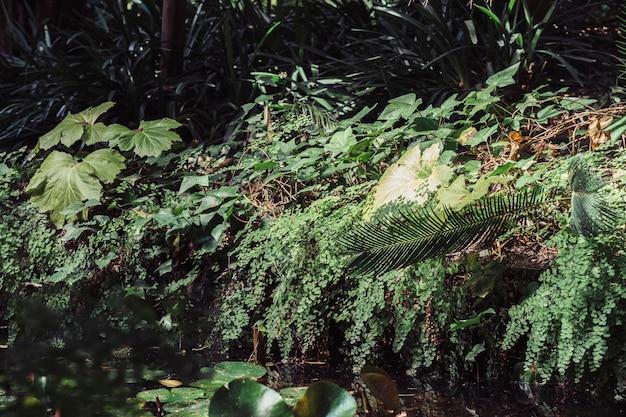 Лес с растительностью