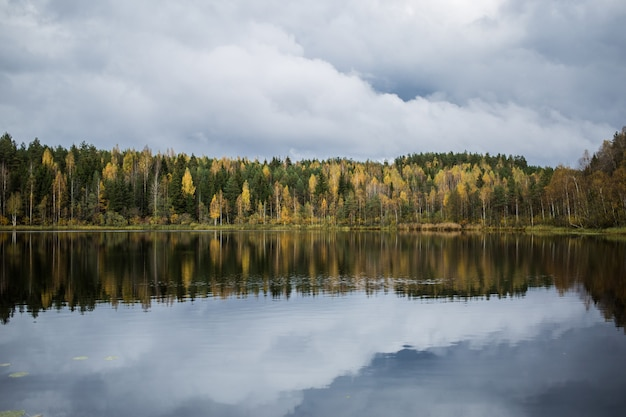 Forest of yellow autumn trees reflecting in calm lake