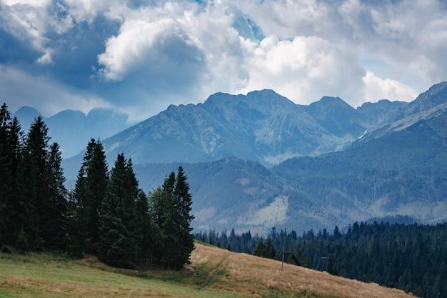 경치 좋은 풍경보기에서 안개에 가려진 상록 침엽수와 낮은 거짓말 구름에 숲이 우거진 산 경사면