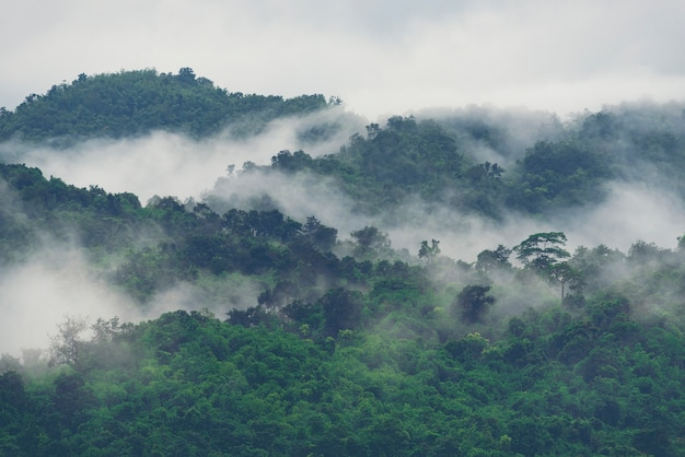 Forested mountain slope in low lying cloud with the evergreen conifers shrouded in mist