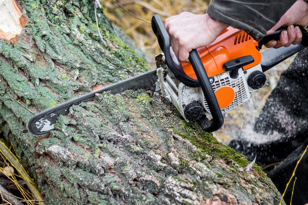 The forester saws the deck of a tree of chainsaw