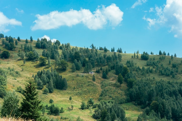 Forests of evergreen coniferous trees on mountain landscape