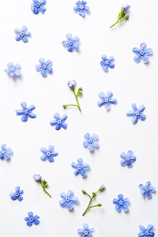 Forget-me-not blue flowers on a light background